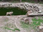 wildpark 10