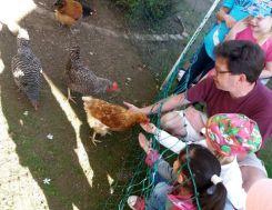 Hühner 2